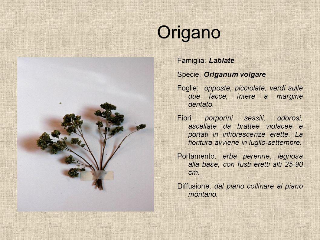 Noce Famiglia: Juglandaceae Specie: Juglans regia Foglie: composte; quella terminale di solito più grande, a margine intero o quasi.