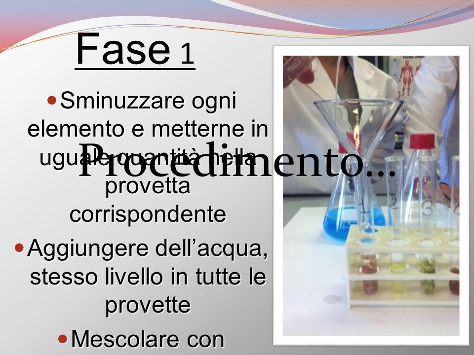Fase 1 Sminuzzare ogni elemento e metterne in uguale quantità nella provetta corrispondente Sminuzzare ogni elemento e metterne in uguale quantità nel