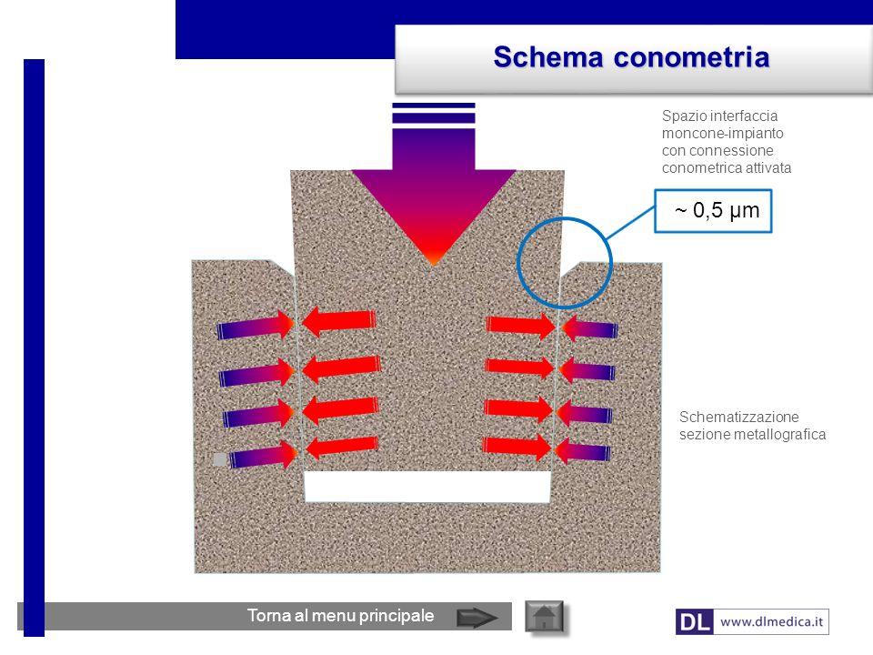 Spazio interfaccia moncone-impianto con connessione conometrica attivata Schema conometria Torna al menu principale ~ 0,5 µm Schematizzazione sezione