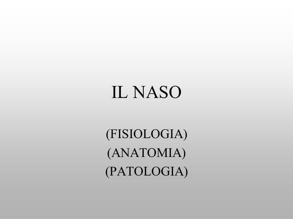 IL NASO (FISIOLOGIA) (ANATOMIA) (PATOLOGIA)