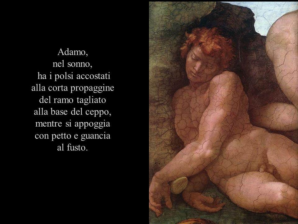 Adamo, nel sonno, ha i polsi accostati alla corta propaggine del ramo tagliato alla base del ceppo, mentre si appoggia con petto e guancia al fusto.