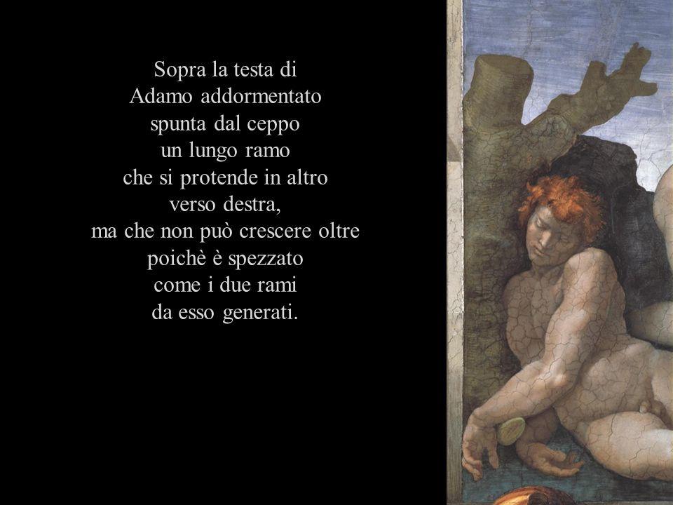 Sopra la testa di Adamo addormentato spunta dal ceppo un lungo ramo che si protende in altro verso destra, ma che non può crescere oltre poichè è spez