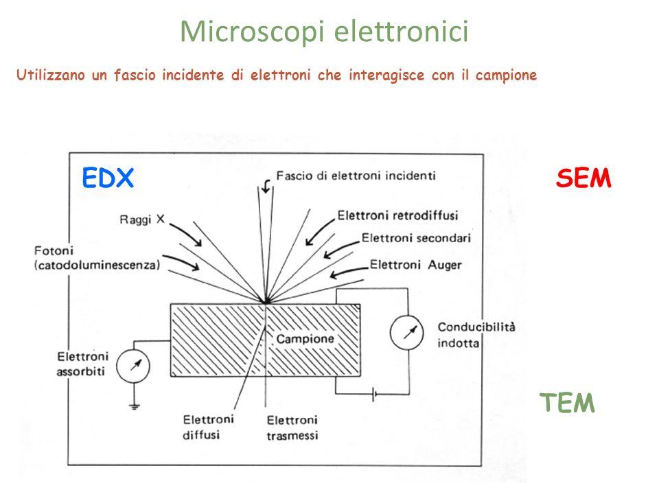 Microscopi elettronici Utilizzano un fascio incidente di elettroni che interagisce con il campione SEM TEM EDX