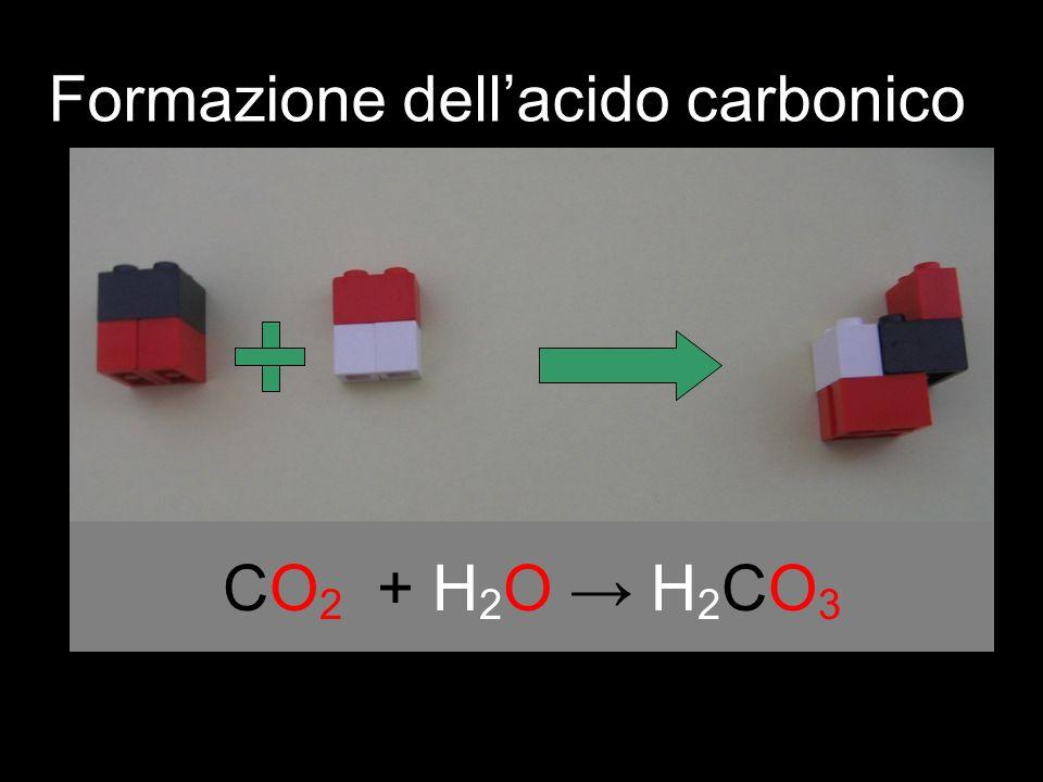 CO 2 + H 2 O H 2 CO 3 Formazione dellacido carbonico