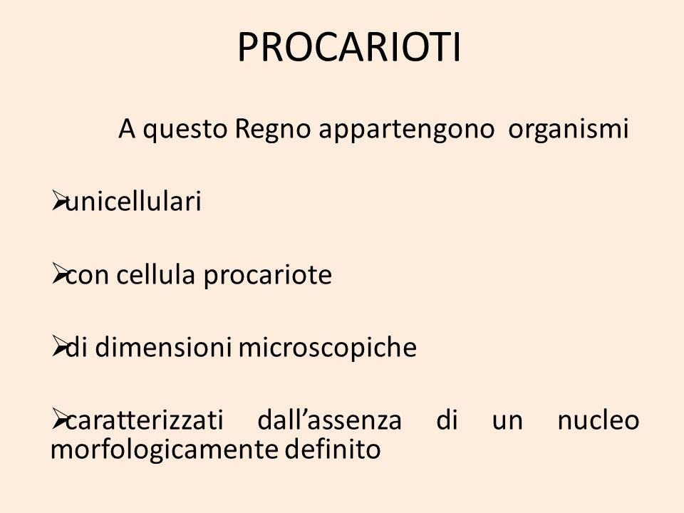 PROCARIOTI A questo Regno appartengono organismi unicellulari con cellula procariote di dimensioni microscopiche caratterizzati dallassenza di un nucl