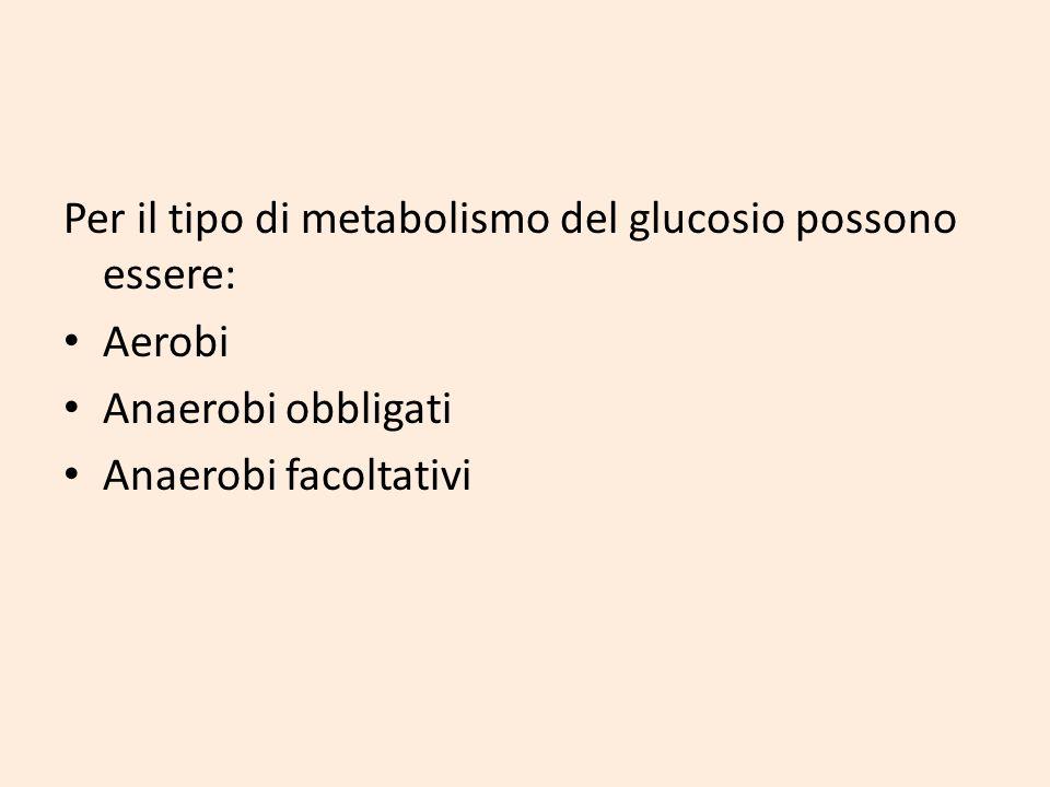Per il tipo di metabolismo del glucosio possono essere: Aerobi Anaerobi obbligati Anaerobi facoltativi
