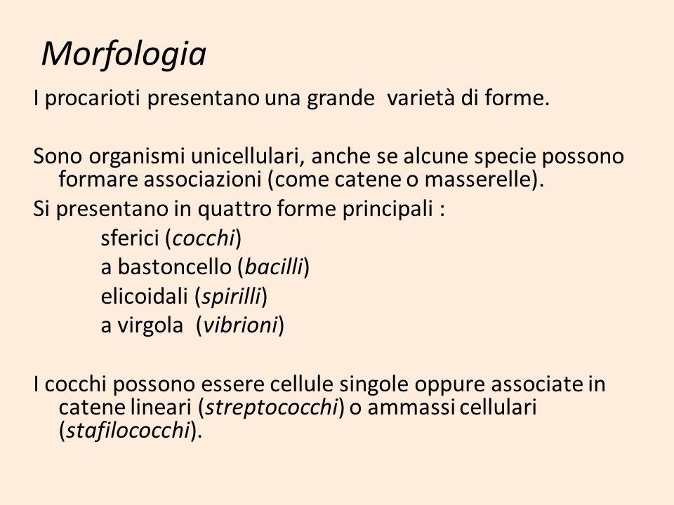 Morfologia I procarioti presentano una grande varietà di forme. Sono organismi unicellulari, anche se alcune specie possono formare associazioni (come