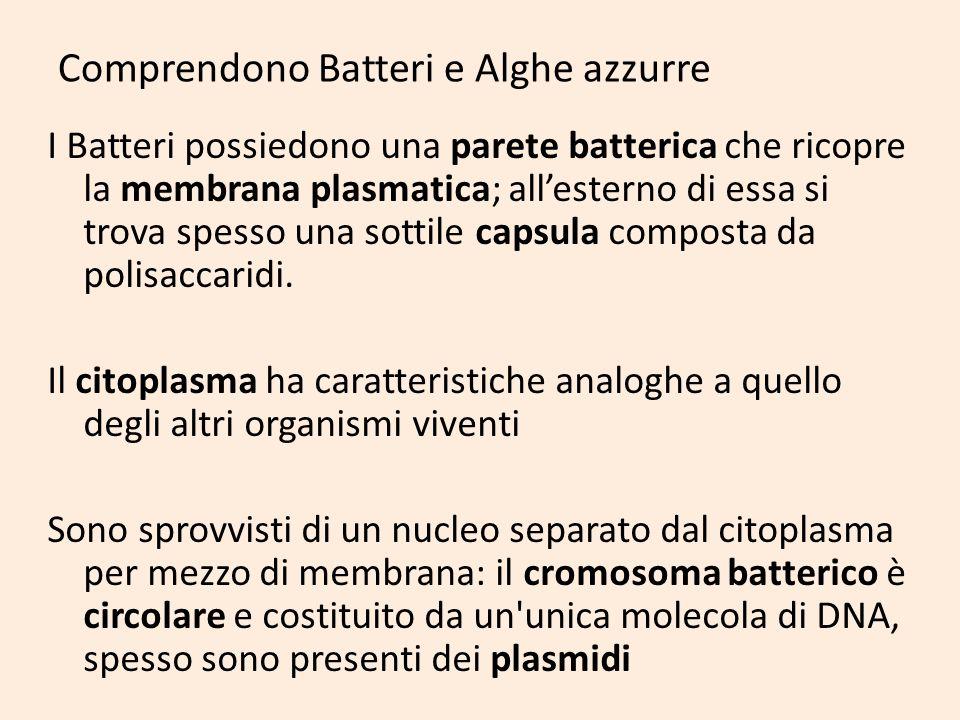 Comprendono Batteri e Alghe azzurre I Batteri possiedono una parete batterica che ricopre la membrana plasmatica; allesterno di essa si trova spesso u