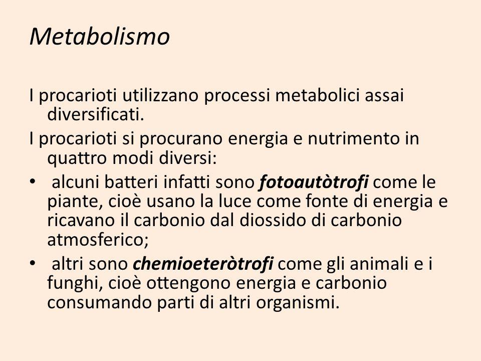 Metabolismo I procarioti utilizzano processi metabolici assai diversificati. I procarioti si procurano energia e nutrimento in quattro modi diversi: a