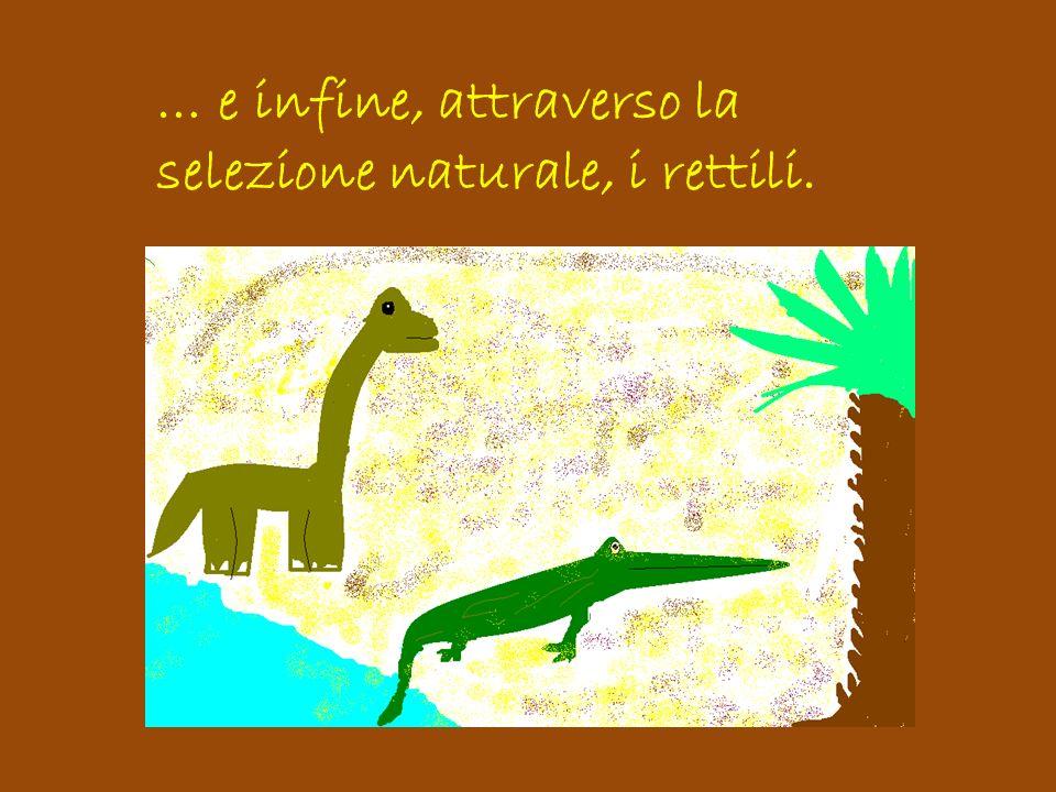 Una parte di questi rettili si evolse in una varietà di creature comprendenti anche i mammiferi
