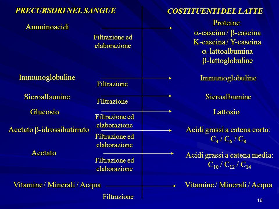 16 PRECURSORI NEL SANGUE COSTITUENTI DEL LATTE Amminoacidi Filtrazione ed elaborazione Proteine: -caseina / -caseina K-caseina / Y-caseina -lattoalbum