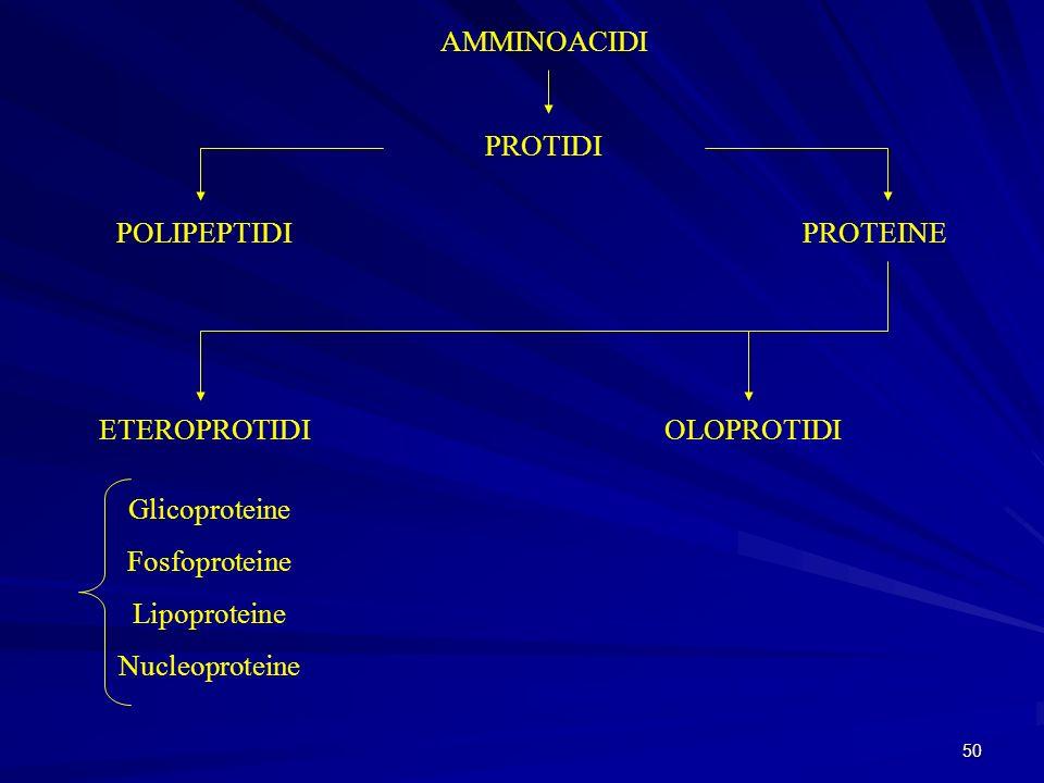 50 AMMINOACIDI PROTIDI POLIPEPTIDIPROTEINE ETEROPROTIDI Glicoproteine Fosfoproteine Lipoproteine Nucleoproteine OLOPROTIDI