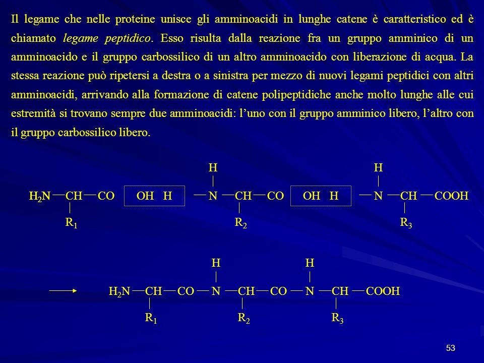 53 Il legame che nelle proteine unisce gli amminoacidi in lunghe catene è caratteristico ed è chiamato legame peptidico. Esso risulta dalla reazione f