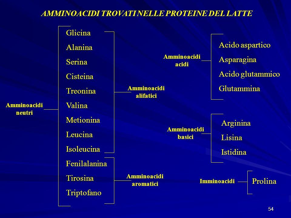 54 AMMINOACIDI TROVATI NELLE PROTEINE DEL LATTE Amminoacidi neutri Glicina Alanina Serina Cisteina Treonina Valina Metionina Leucina Isoleucina Fenila