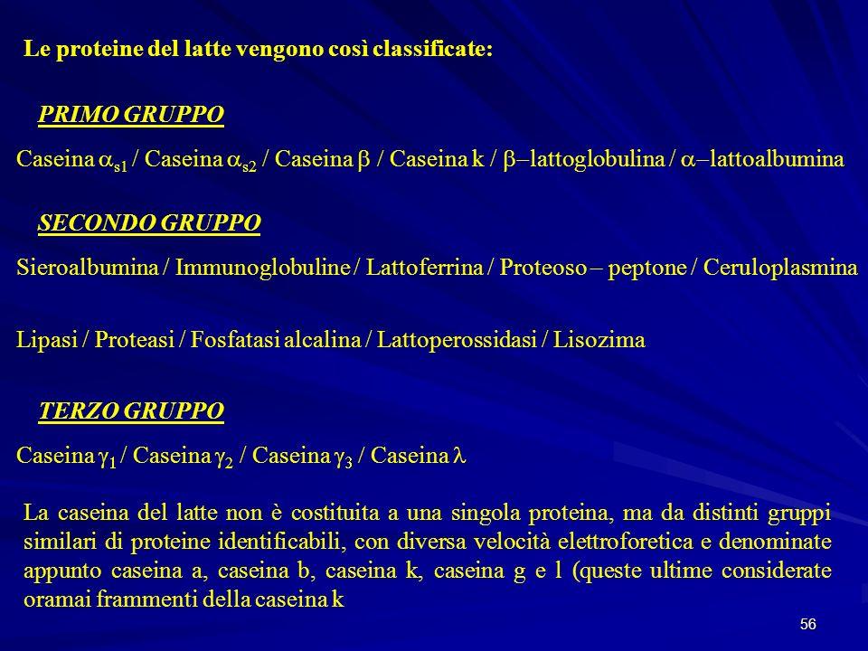 56 Le proteine del latte vengono così classificate: PRIMO GRUPPO Caseina s1 / Caseina s2 / Caseina Caseina k / lattoglobulina / lattoalbumina SECONDO