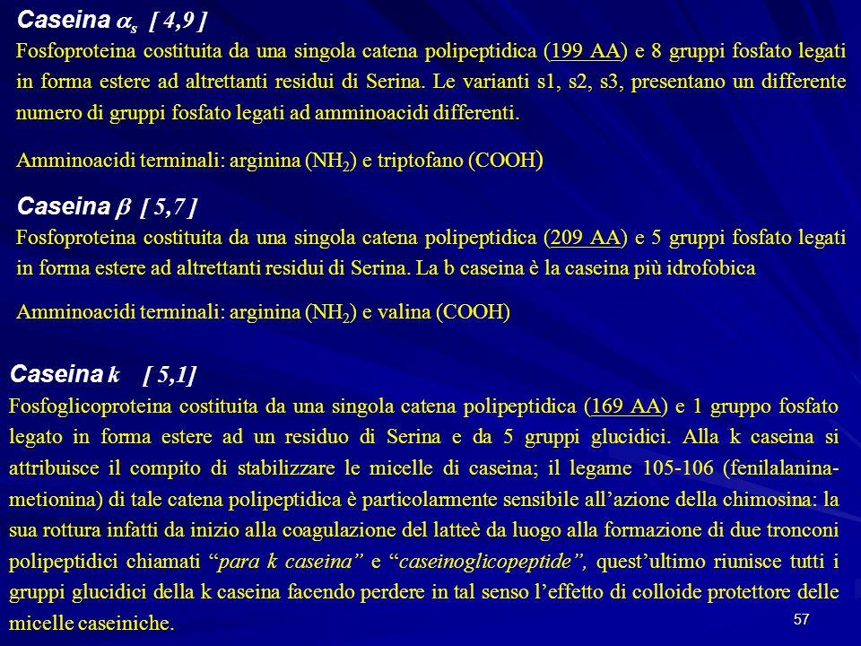 57 Caseina s [ 4,9 ] Fosfoproteina costituita da una singola catena polipeptidica (199 AA) e 8 gruppi fosfato legati in forma estere ad altrettanti re