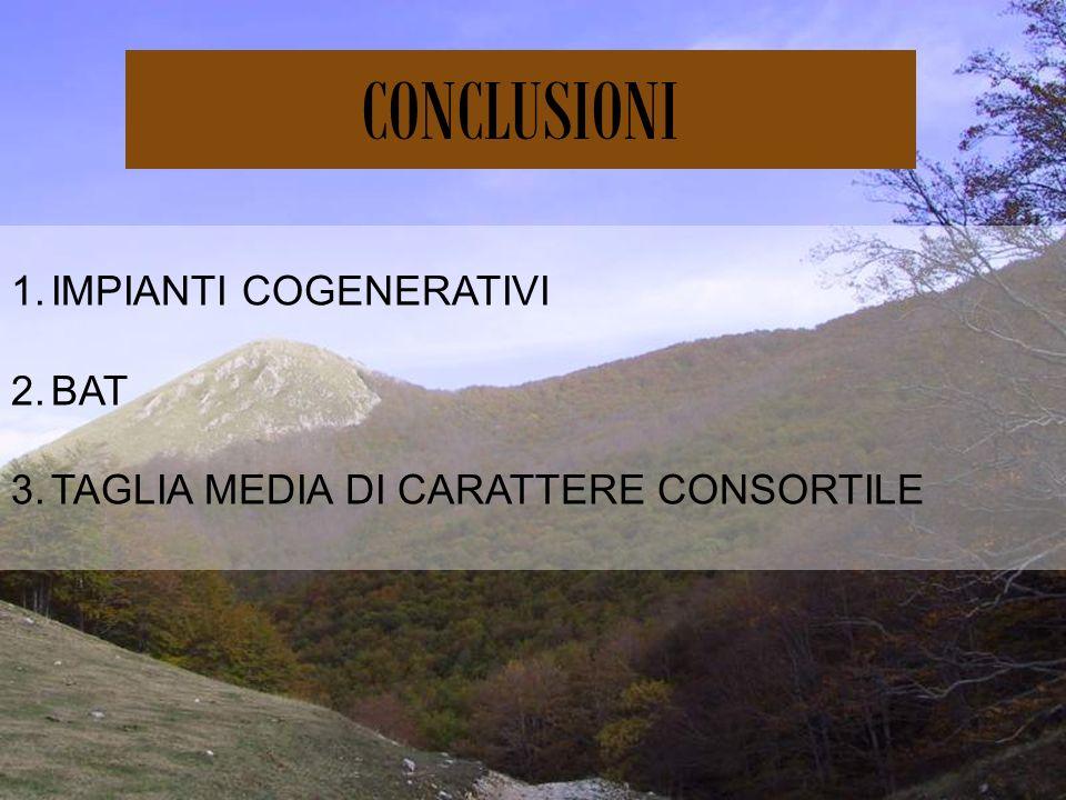 CONCLUSIONI 1.IMPIANTI COGENERATIVI 2.BAT 3.TAGLIA MEDIA DI CARATTERE CONSORTILE