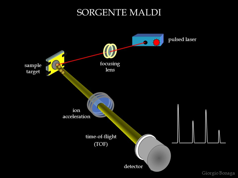 SORGENTE MALDI Giorgio Bonaga ion acceleration sample target focusing lens pulsed laser time-of-flight (TOF) detector