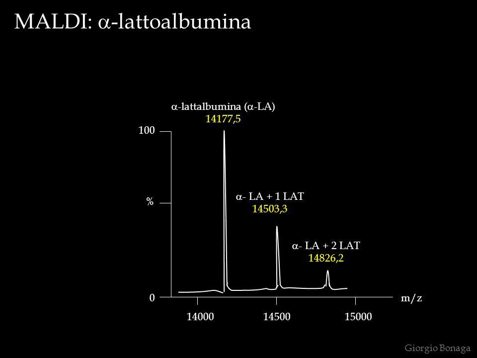 Giorgio Bonaga 100 0 % 140001450015000 -lattalbumina ( -LA) 14177,5 - LA + 1 LAT 14503,3 - LA + 2 LAT 14826,2 m/z MALDI: -lattoalbumina