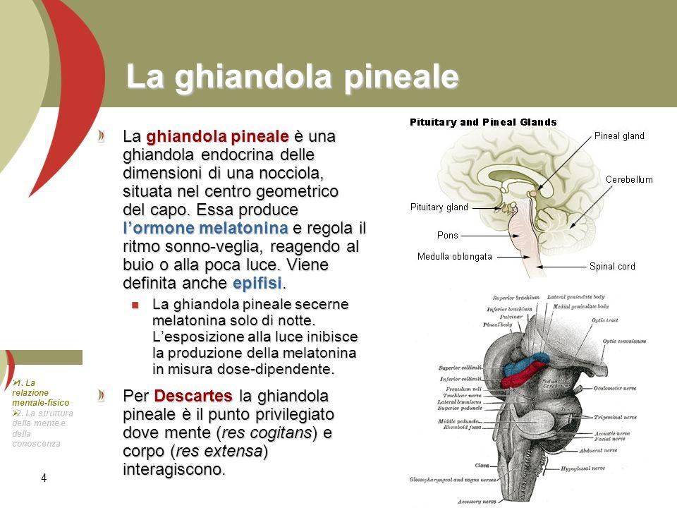 4 La ghiandola pineale La ghiandola pineale è una ghiandola endocrina delle dimensioni di una nocciola, situata nel centro geometrico del capo. Essa p