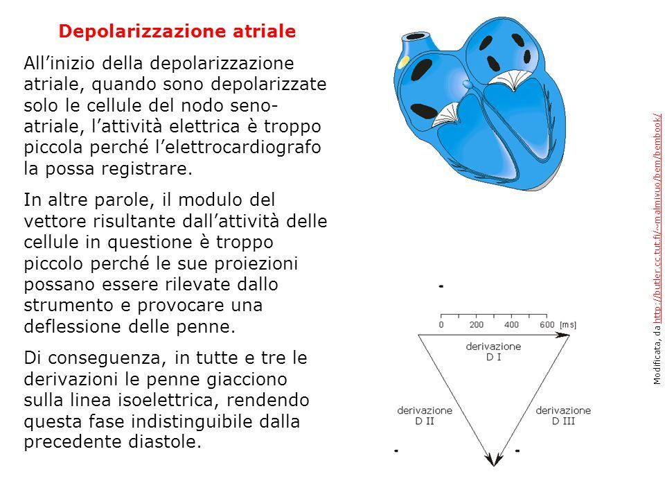 Depolarizzazione atriale Allinizio della depolarizzazione atriale, quando sono depolarizzate solo le cellule del nodo seno- atriale, lattività elettri