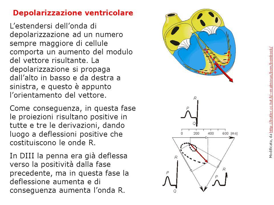 Depolarizzazione ventricolare Lestendersi dellonda di depolarizzazione ad un numero sempre maggiore di cellule comporta un aumento del modulo del vett