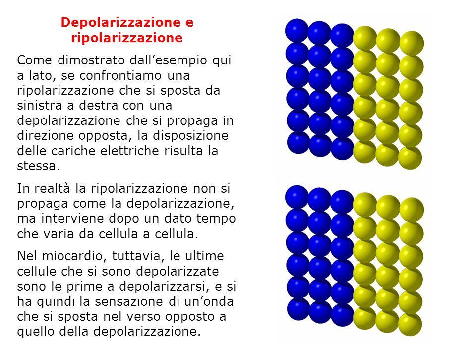 Depolarizzazione e ripolarizzazione Come dimostrato dallesempio qui a lato, se confrontiamo una ripolarizzazione che si sposta da sinistra a destra co