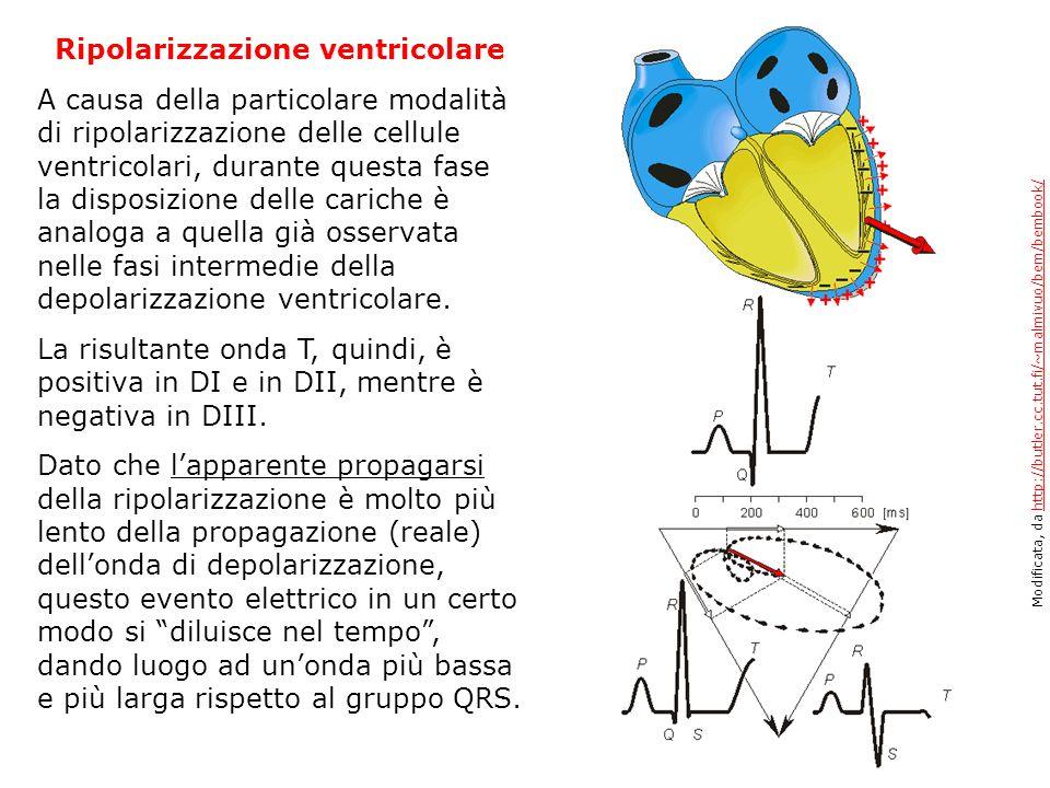 Ripolarizzazione ventricolare A causa della particolare modalità di ripolarizzazione delle cellule ventricolari, durante questa fase la disposizione d
