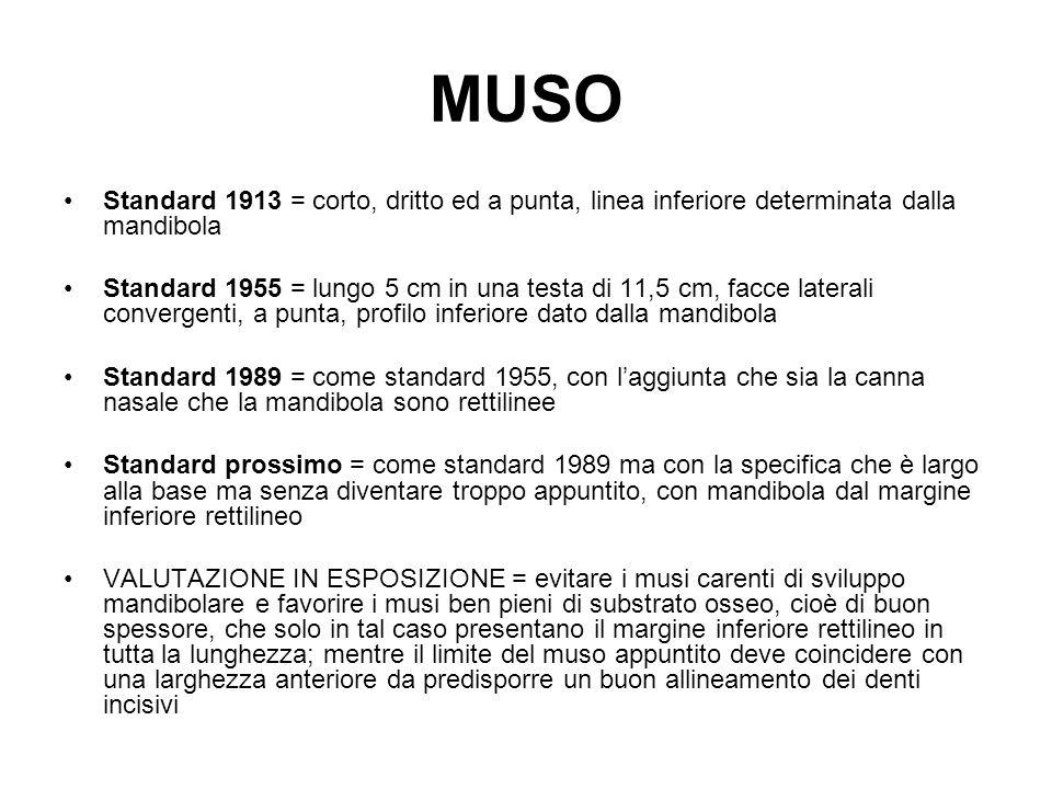 MUSO Standard 1913 = corto, dritto ed a punta, linea inferiore determinata dalla mandibola Standard 1955 = lungo 5 cm in una testa di 11,5 cm, facce l