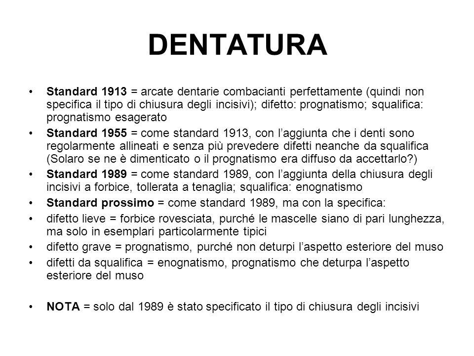 DENTATURA Standard 1913 = arcate dentarie combacianti perfettamente (quindi non specifica il tipo di chiusura degli incisivi); difetto: prognatismo; s