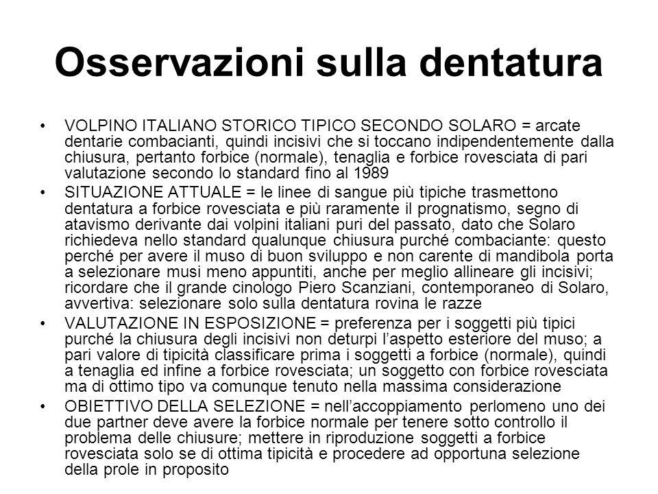 Osservazioni sulla dentatura VOLPINO ITALIANO STORICO TIPICO SECONDO SOLARO = arcate dentarie combacianti, quindi incisivi che si toccano indipendente