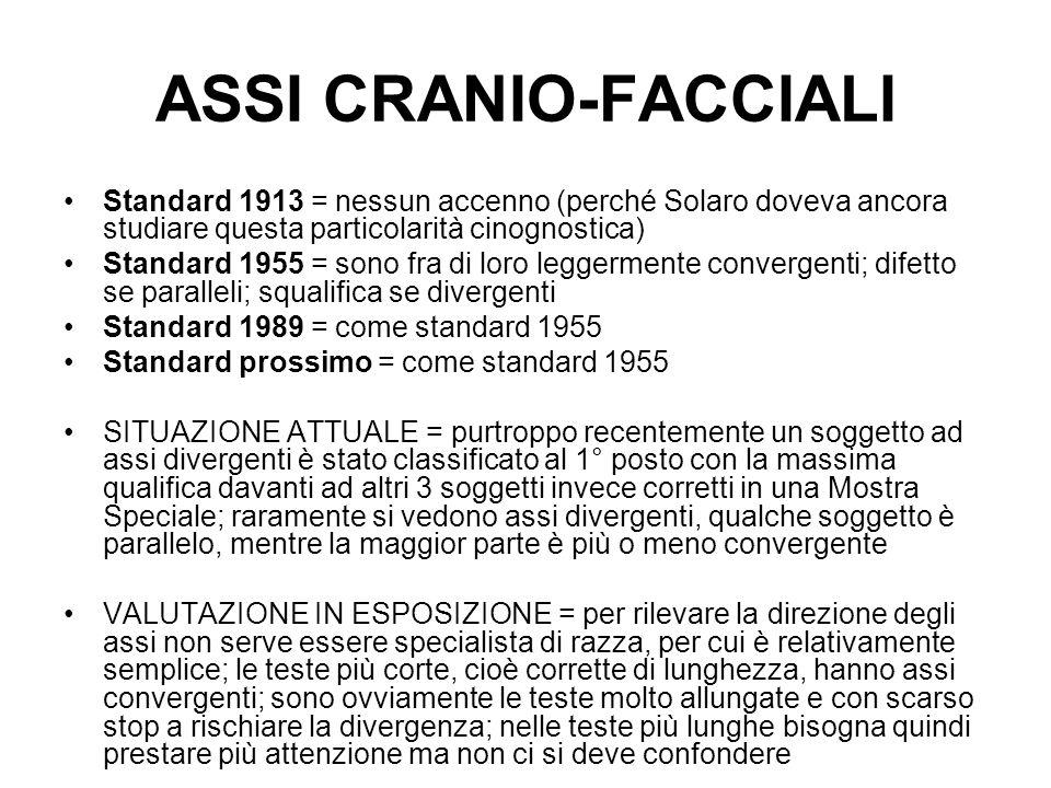 ASSI CRANIO-FACCIALI Standard 1913 = nessun accenno (perché Solaro doveva ancora studiare questa particolarità cinognostica) Standard 1955 = sono fra