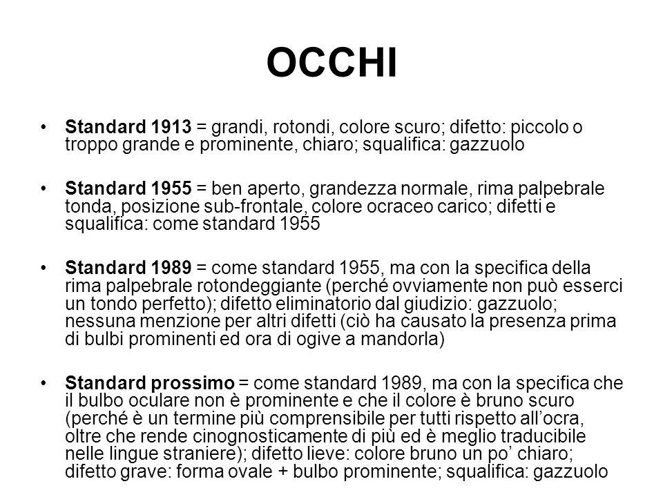 OCCHI Standard 1913 = grandi, rotondi, colore scuro; difetto: piccolo o troppo grande e prominente, chiaro; squalifica: gazzuolo Standard 1955 = ben a