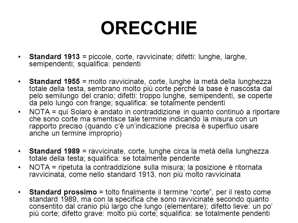 ORECCHIE Standard 1913 = piccole, corte, ravvicinate; difetti: lunghe, larghe, semipendenti; squalifica: pendenti Standard 1955 = molto ravvicinate, c