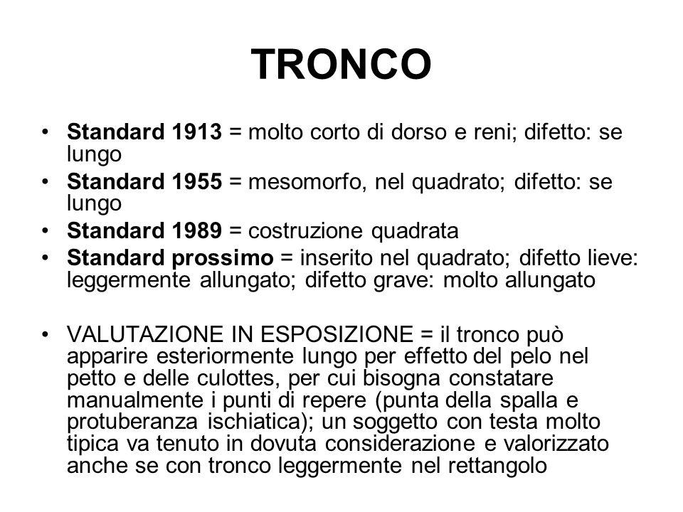 TRONCO Standard 1913 = molto corto di dorso e reni; difetto: se lungo Standard 1955 = mesomorfo, nel quadrato; difetto: se lungo Standard 1989 = costr