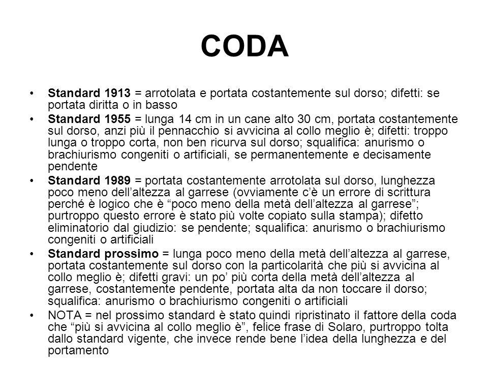 CODA Standard 1913 = arrotolata e portata costantemente sul dorso; difetti: se portata diritta o in basso Standard 1955 = lunga 14 cm in un cane alto