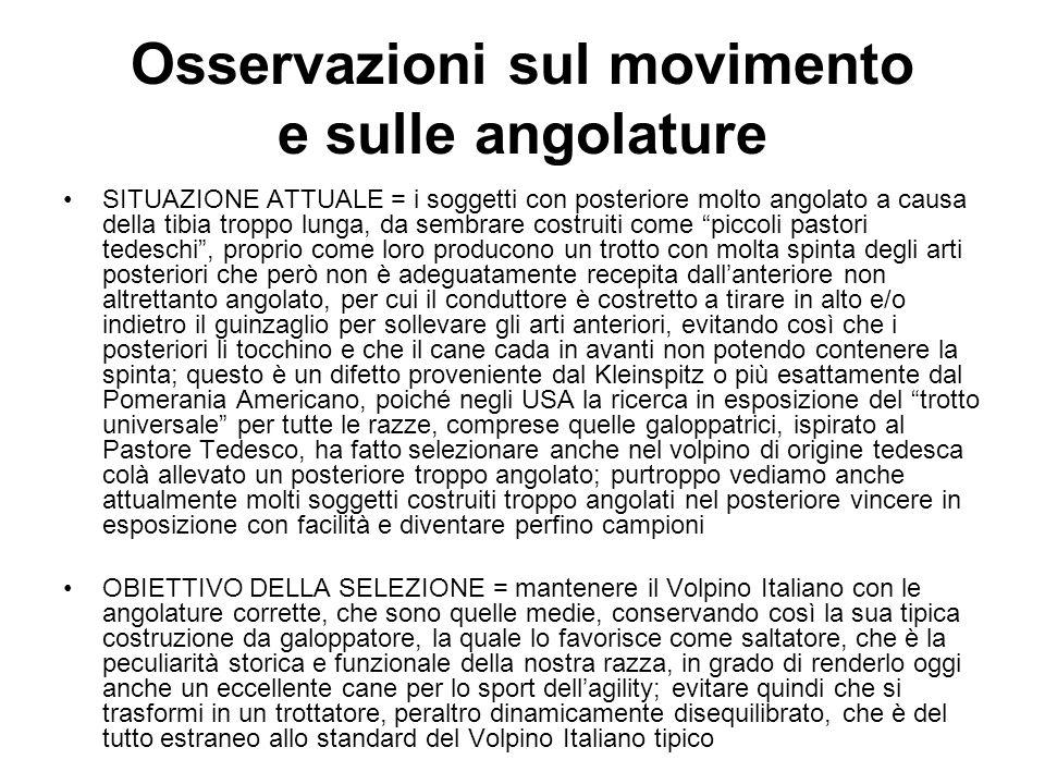 Osservazioni sul movimento e sulle angolature SITUAZIONE ATTUALE = i soggetti con posteriore molto angolato a causa della tibia troppo lunga, da sembr
