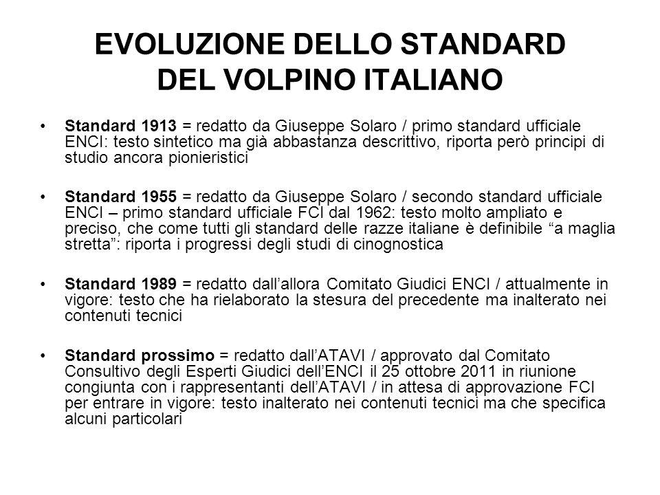 EVOLUZIONE DELLO STANDARD DEL VOLPINO ITALIANO Standard 1913 = redatto da Giuseppe Solaro / primo standard ufficiale ENCI: testo sintetico ma già abba