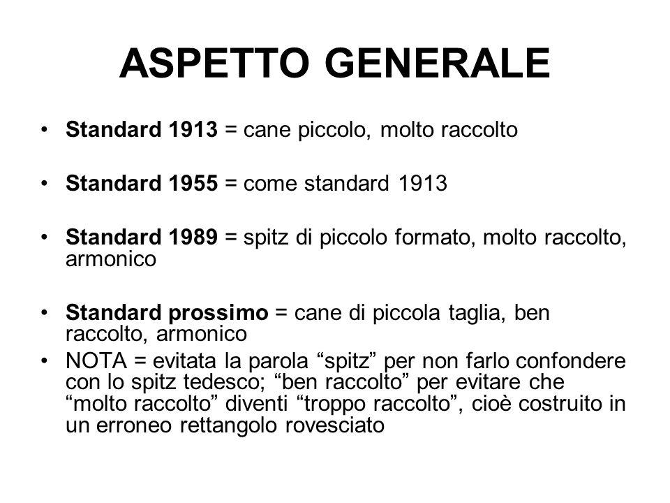ASPETTO GENERALE Standard 1913 = cane piccolo, molto raccolto Standard 1955 = come standard 1913 Standard 1989 = spitz di piccolo formato, molto racco