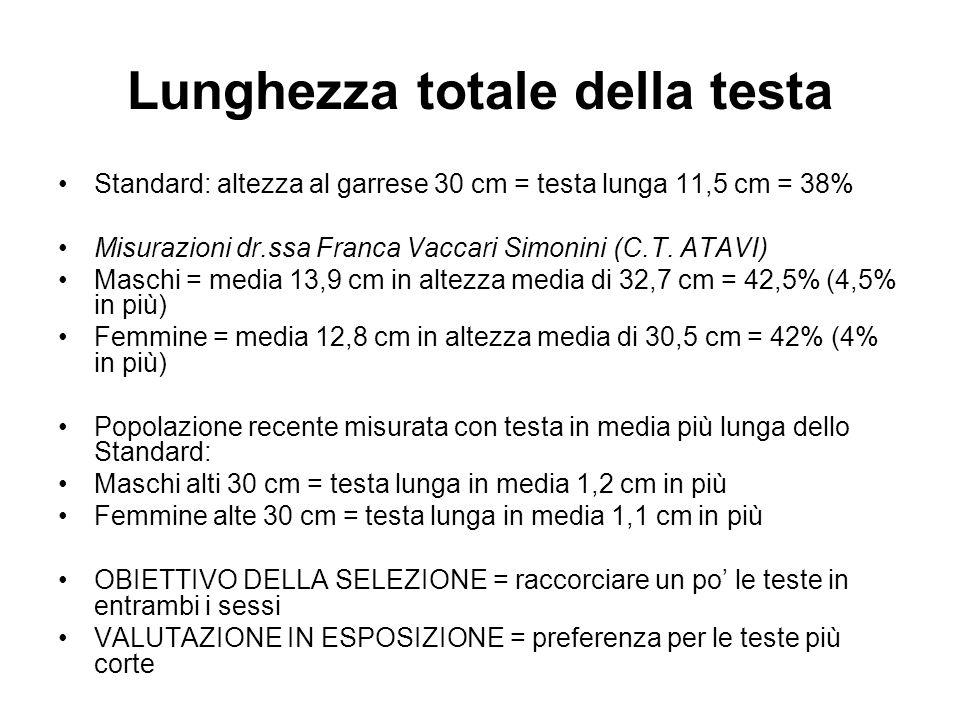 Lunghezza totale della testa Standard: altezza al garrese 30 cm = testa lunga 11,5 cm = 38% Misurazioni dr.ssa Franca Vaccari Simonini (C.T. ATAVI) Ma