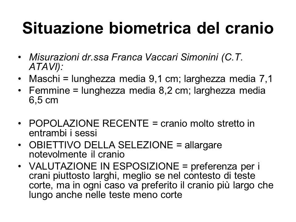 Situazione biometrica del cranio Misurazioni dr.ssa Franca Vaccari Simonini (C.T. ATAVI): Maschi = lunghezza media 9,1 cm; larghezza media 7,1 Femmine