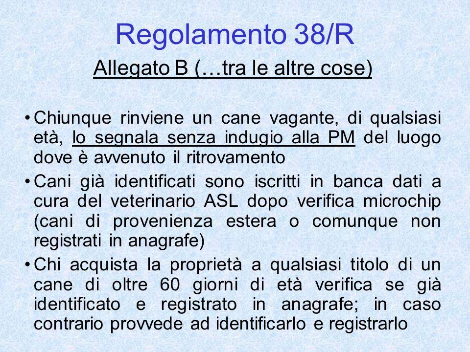 Regolamento 38/R Allegato B (…tra le altre cose) Chiunque rinviene un cane vagante, di qualsiasi età, lo segnala senza indugio alla PM del luogo dove