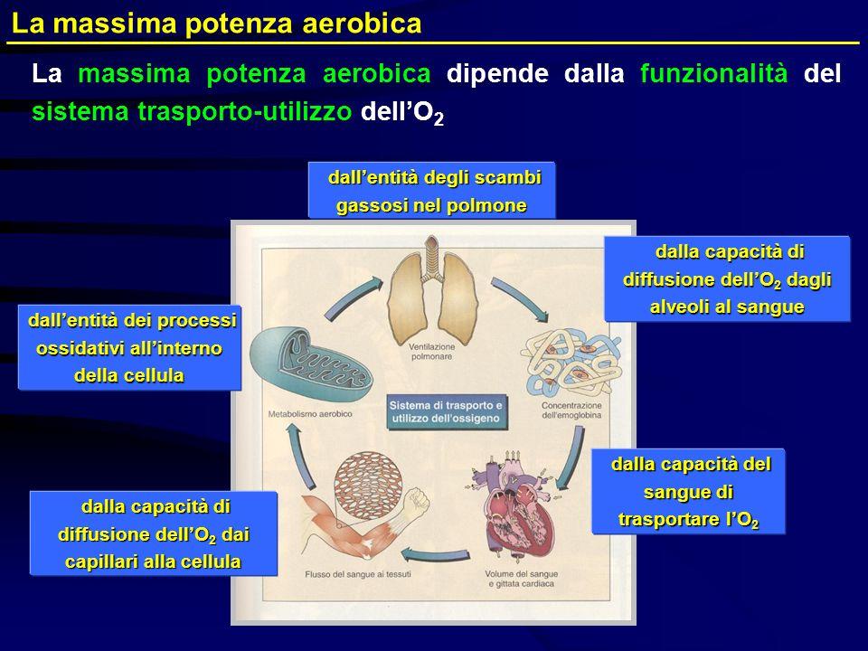 La massima potenza aerobica dipende dalla funzionalità del sistema trasporto-utilizzo dellO 2 dallentità degli scambi gassosi nel polmone dallentità d