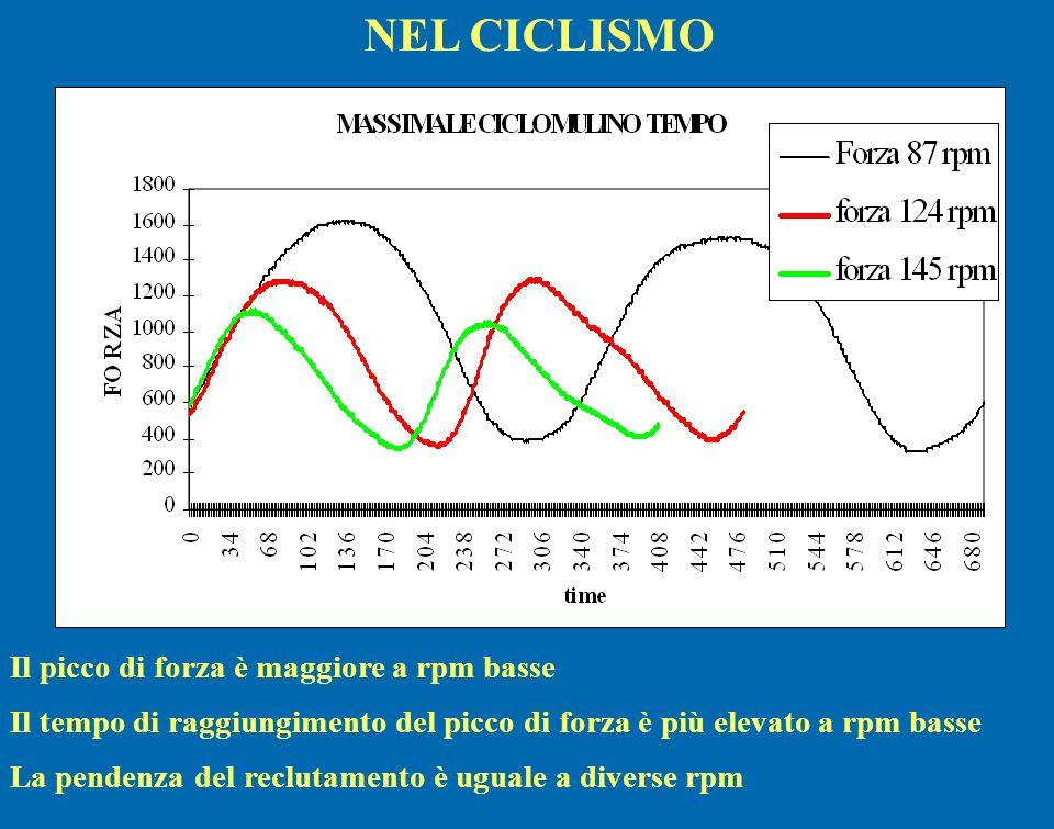 Il picco di forza è maggiore a rpm basse Il tempo di raggiungimento del picco di forza è più elevato a rpm basse La pendenza del reclutamento è uguale