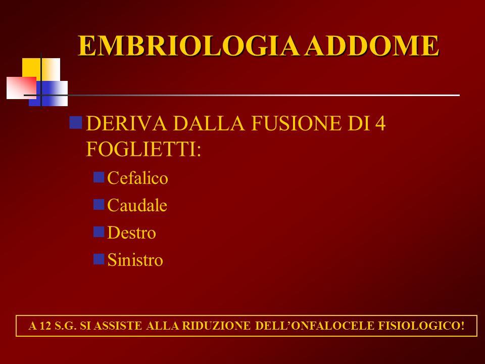 DERIVA DALLA FUSIONE DI 4 FOGLIETTI: Cefalico Caudale Destro Sinistro EMBRIOLOGIA ADDOME A 12 S.G. SI ASSISTE ALLA RIDUZIONE DELLONFALOCELE FISIOLOGIC