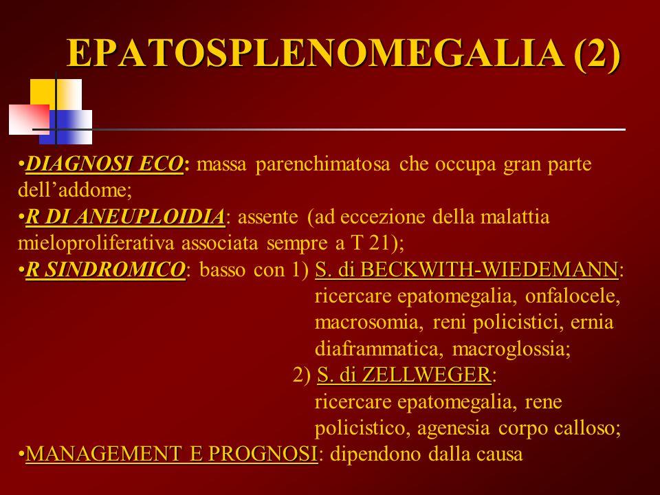 EPATOSPLENOMEGALIA (2) DIAGNOSI ECODIAGNOSI ECO: massa parenchimatosa che occupa gran parte delladdome; R DI ANEUPLOIDIAR DI ANEUPLOIDIA: assente (ad