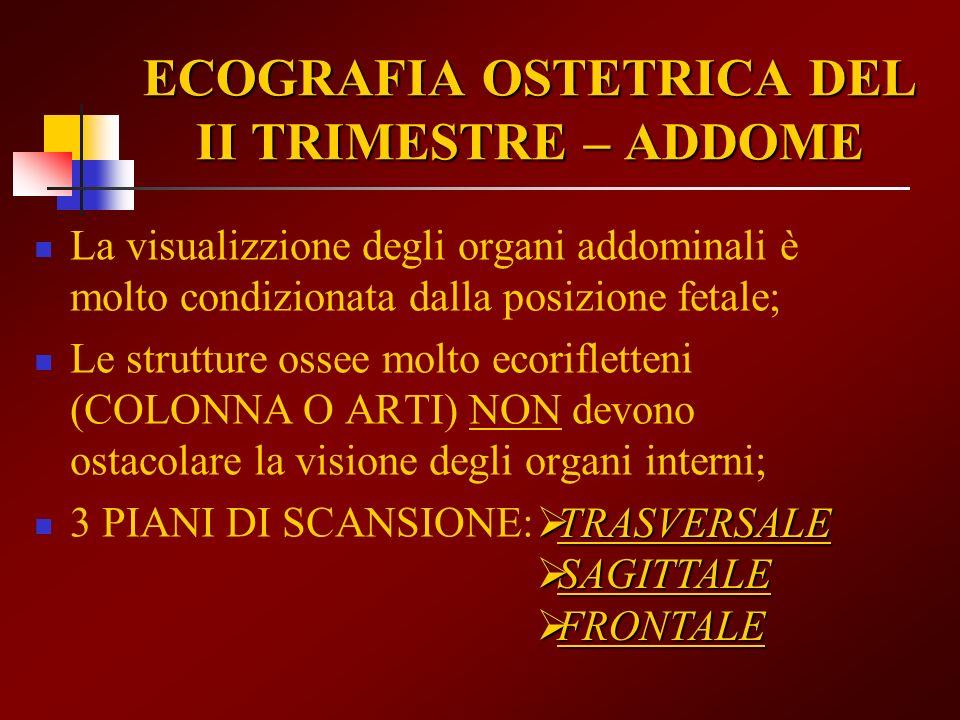 ECOGRAFIA OSTETRICA DEL II TRIMESTRE – ADDOME La visualizzione degli organi addominali è molto condizionata dalla posizione fetale; Le strutture ossee
