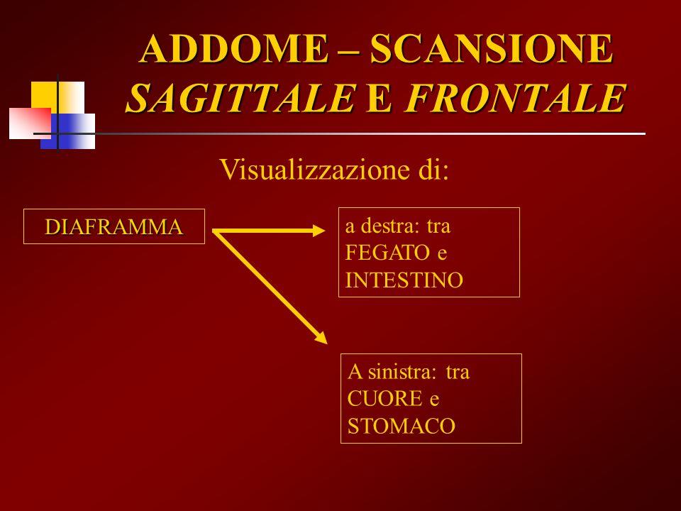 ADDOME – SCANSIONE SAGITTALE E FRONTALE Visualizzazione di: DIAFRAMMA a destra: tra FEGATO e INTESTINO A sinistra: tra CUORE e STOMACO