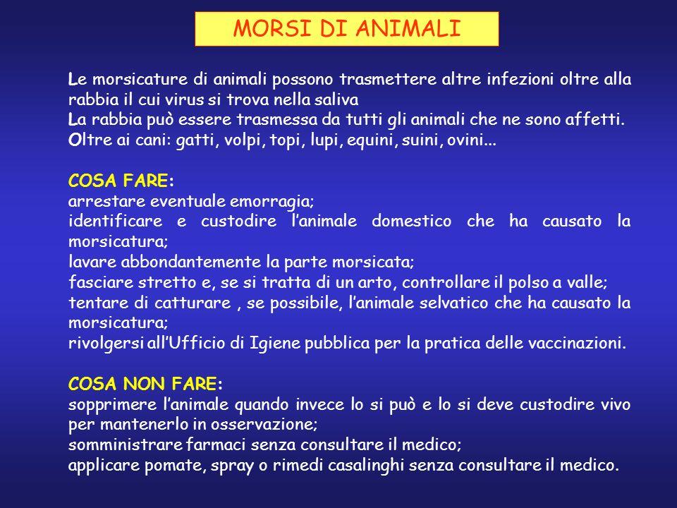 MORSI DI ANIMALI Le morsicature di animali possono trasmettere altre infezioni oltre alla rabbia il cui virus si trova nella saliva La rabbia può esse