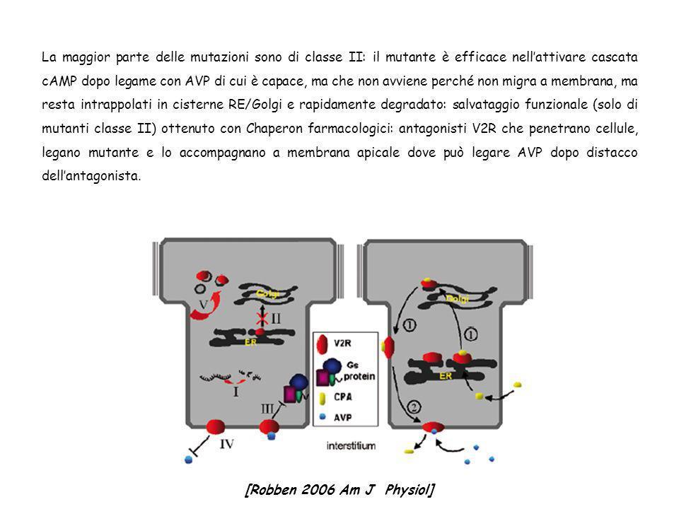 La maggior parte delle mutazioni sono di classe II: il mutante è efficace nellattivare cascata cAMP dopo legame con AVP di cui è capace, ma che non av
